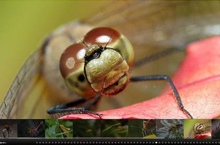 Octuss.com – galeria fotografii